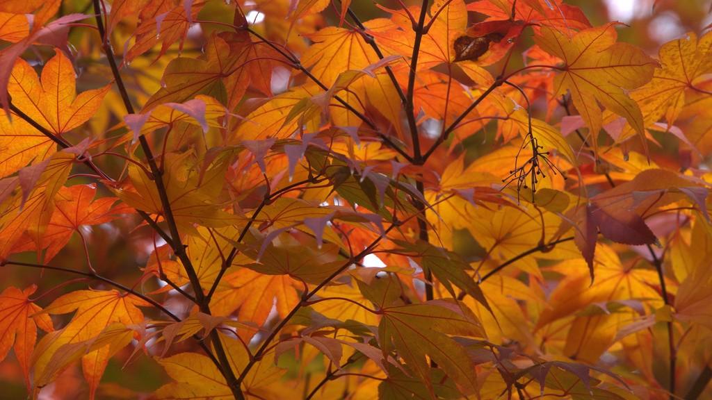 Chatahoochee Fall Foliage